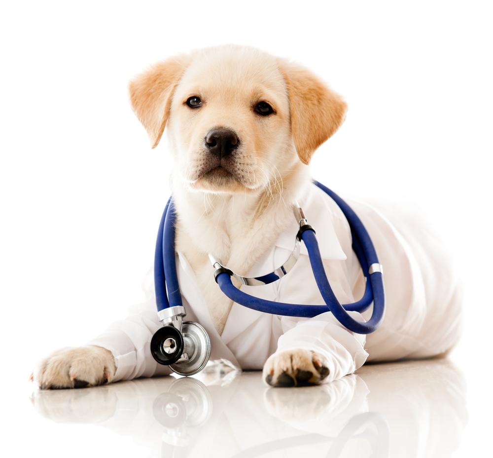 doc puppy